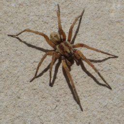 Уничтожение пауков в Ахтубинске